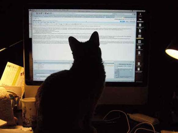 cat blocking access to computer monitor
