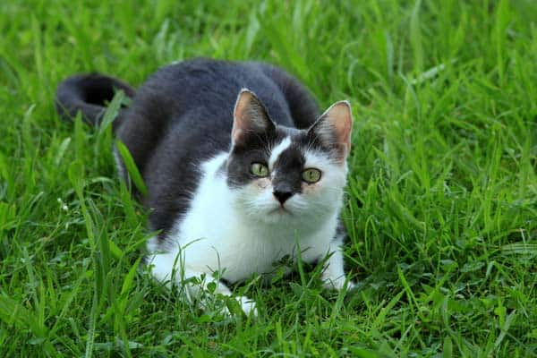 cat on grass