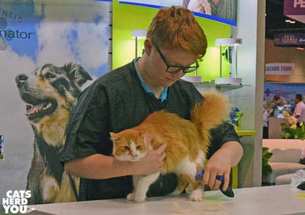 Cat getting groomed with a Furminator at Global Pet Expo 2016 #globalpetexpo