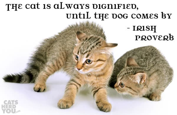 The cat is always dignified, until the dog comes by