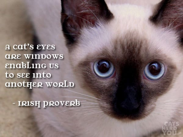 A cat's eyes are windows enabling us to see into another world