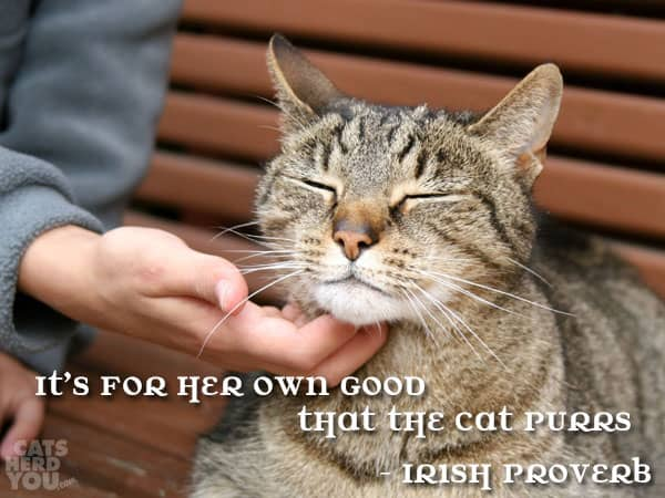 It's for her own good that the cat purrs