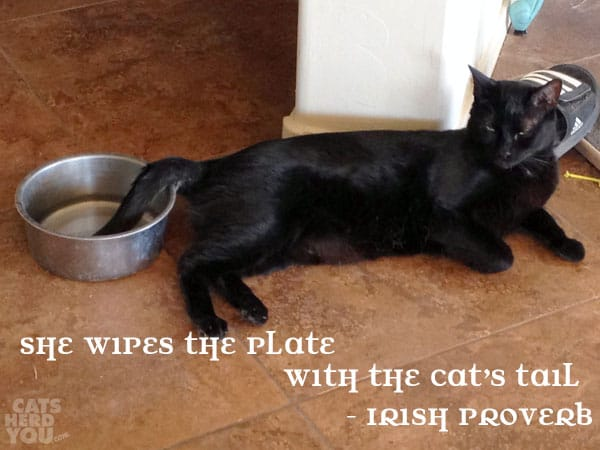 She wipes the plate with the cat's tail