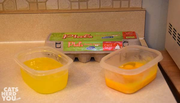 eggs separated for making raw cat food