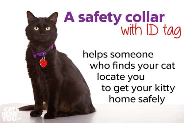safety collar with ID tag helps your kitty get home safely