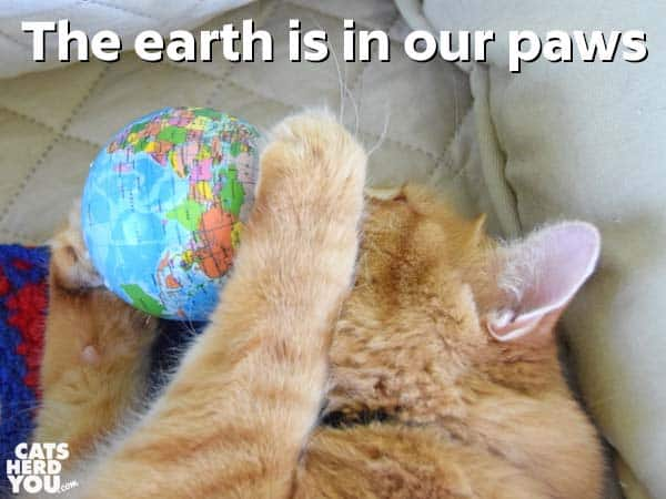 orange tabby cat with earth in his paws