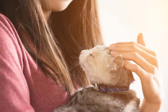 woman holding kitten wearing collar