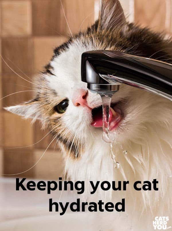 keeping your cat hydrated