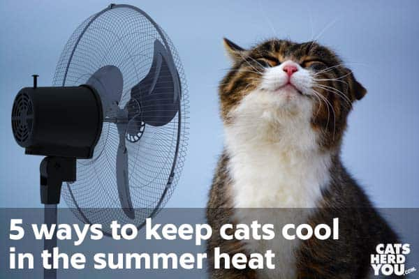 How to keep an outside cat cool