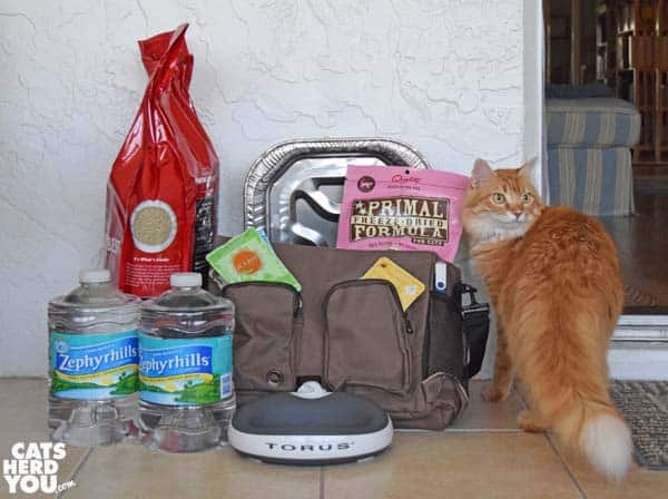 orange tabby cat beside cat emergency supplies