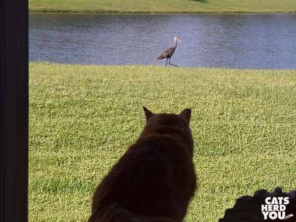 Cat watches bird outside window