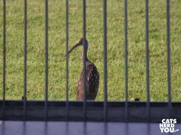 bird outside window