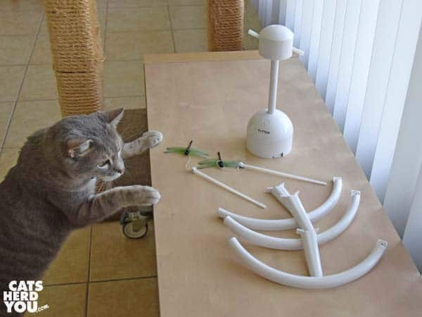 gray tabby cat looks at pieces of unassembled Petsafe Flitter toy