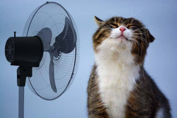 cat enjoying fan