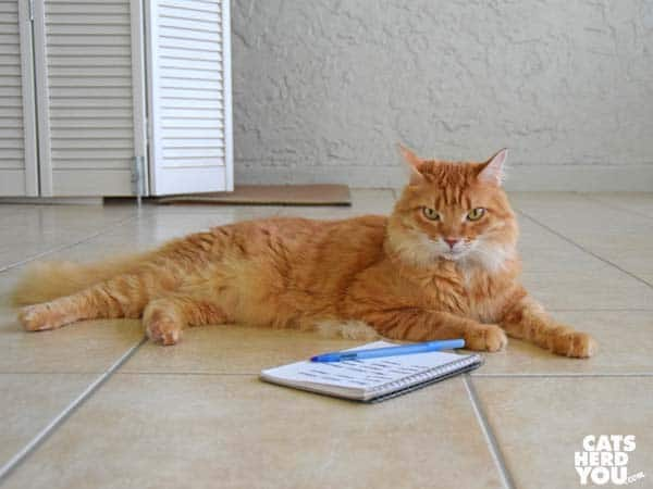 orange tabby cat and notepad
