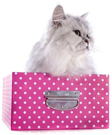 cat in box, photo credit depositphotos/cynoclub