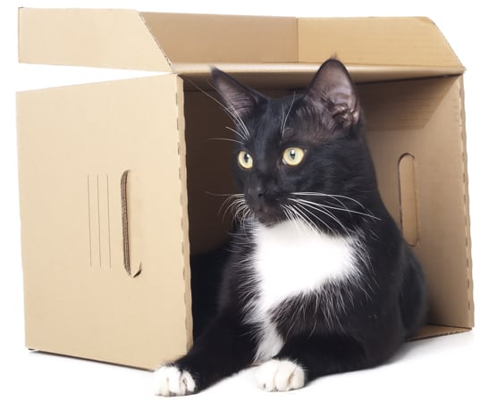 cat in a box. photo credit: depositphotos/Meldes