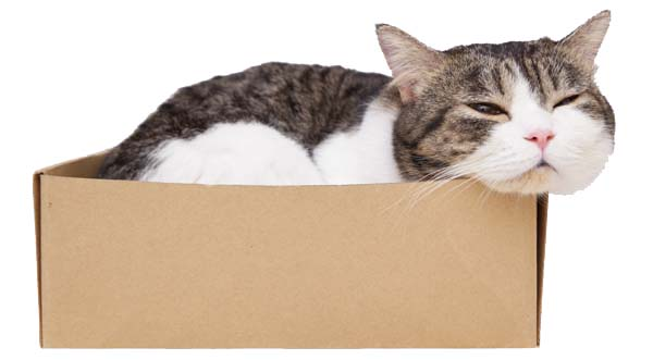cat in box. photo credit depositphotos/pannawat