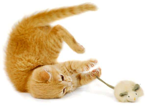 orange cat playing with mouse toy. Photo credit depositphotos/c-foto
