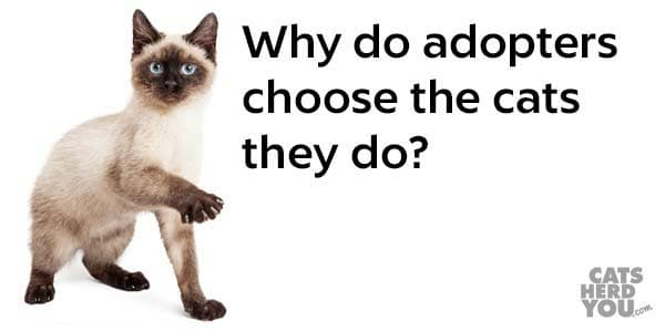 Why do adopters choose the cats they do?