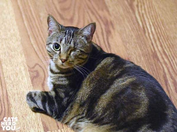 one-eyed brown tabby cat on wood floor