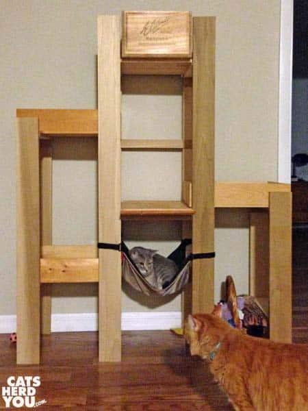 orange tabby cat looks at gray tabby cat resting in cat tree hammock