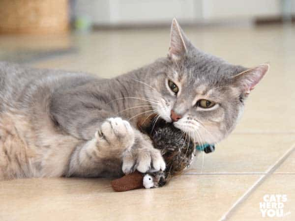 gray tabby cat plays with stuffed toy