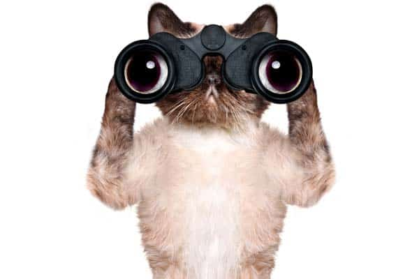 cat looking through binoculars. image credit: depositphotos/RasulovS