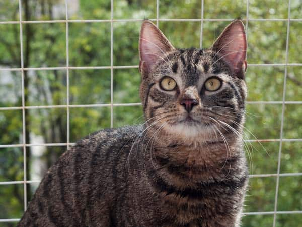 tabby cat with grid separating him from outdoors. photo credit: depositphotos/darzyhanna