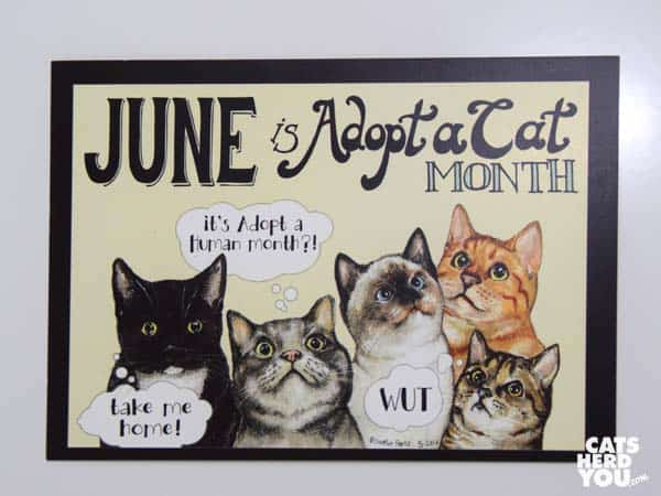 Meowbox Adopt A Cat Month Card
