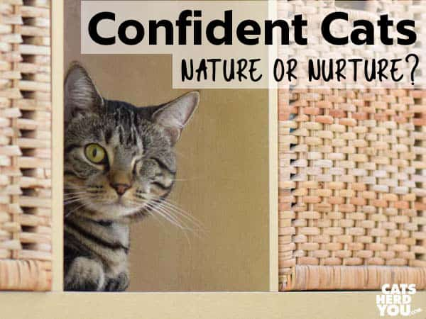 One-eyed brown tabby cat with the message - Confident Cats - Nature or Nurture