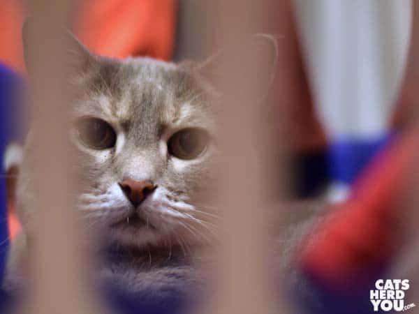 gray tabby cat in laundry basket