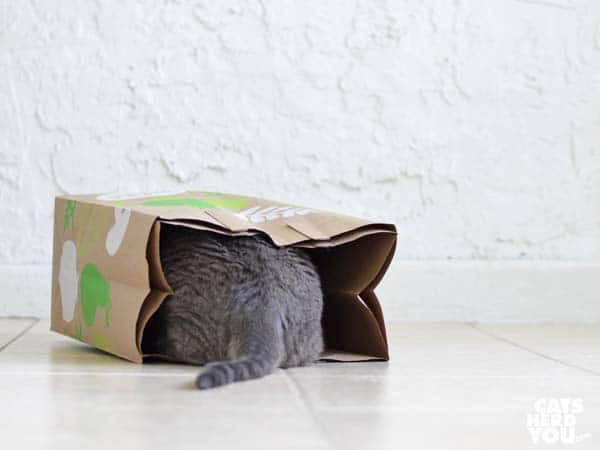 gray tabby cat tail sticking out of paper bag