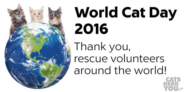 World Cat Day 2016 - Thank you