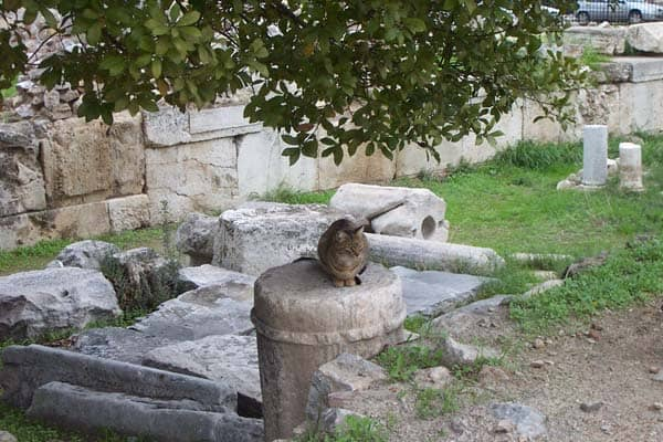 cat in Athens. photo credit Flickr Creative Commons, Liz Lawley