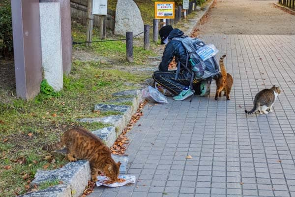 street cats feeding in Osaka, Japan. depositphotos/cowardlion