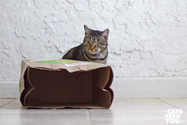 one-eyed brown tabby cat behind brown paper bag