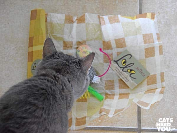 gray tabby cat looks at gifts from Lola the Rescued Cat