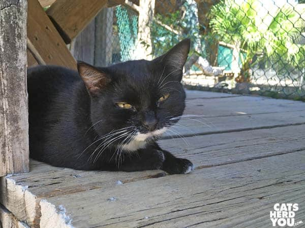 black sleepy cat at The Crab Shack