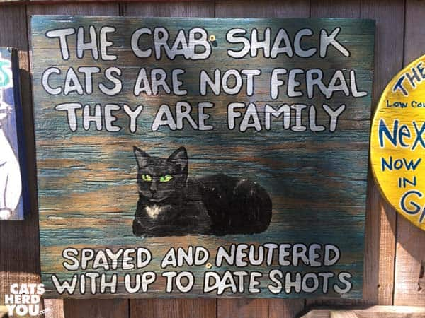 """The Crab Shack cats are not feral"" sign"