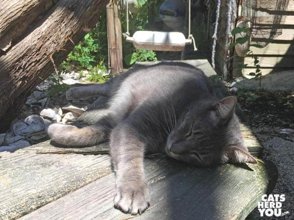 gray tabby cat lounges at The Crab Shack