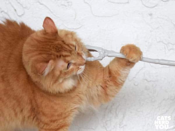 orange tabby cat grabs the skeleton hand