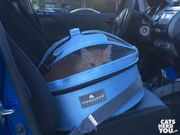 Newton buckledup in sleeypod carrier in car