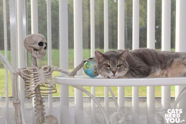 gray tabby cat and skeleton