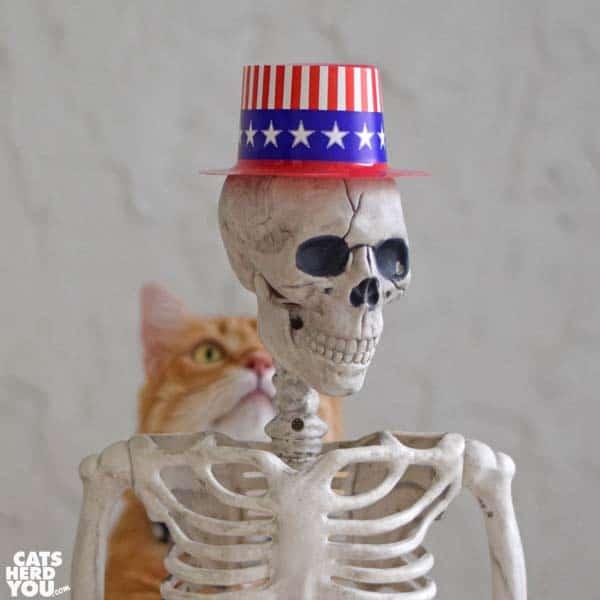 orange tabby cat looks at skeleton wearing Uncle Sam hat