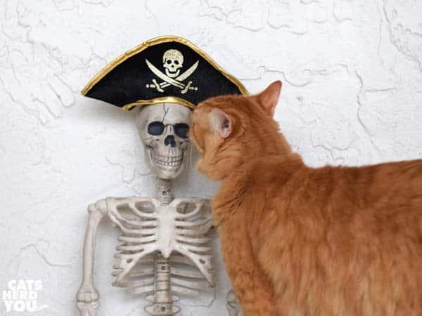 Newton sniffs skeleton wearing pirate hat
