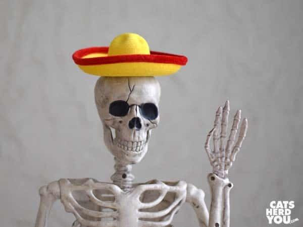 Skeleton in sombrero