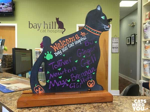 Newton's name on Bay Hill Cat Hospital appointment sign