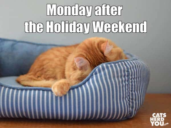 Monday after the Holiday Weekend