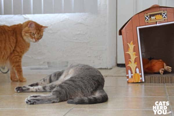 orange tabby cat watches gray tabby cat on ground